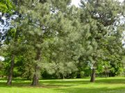 Trees in the Woodland Garden