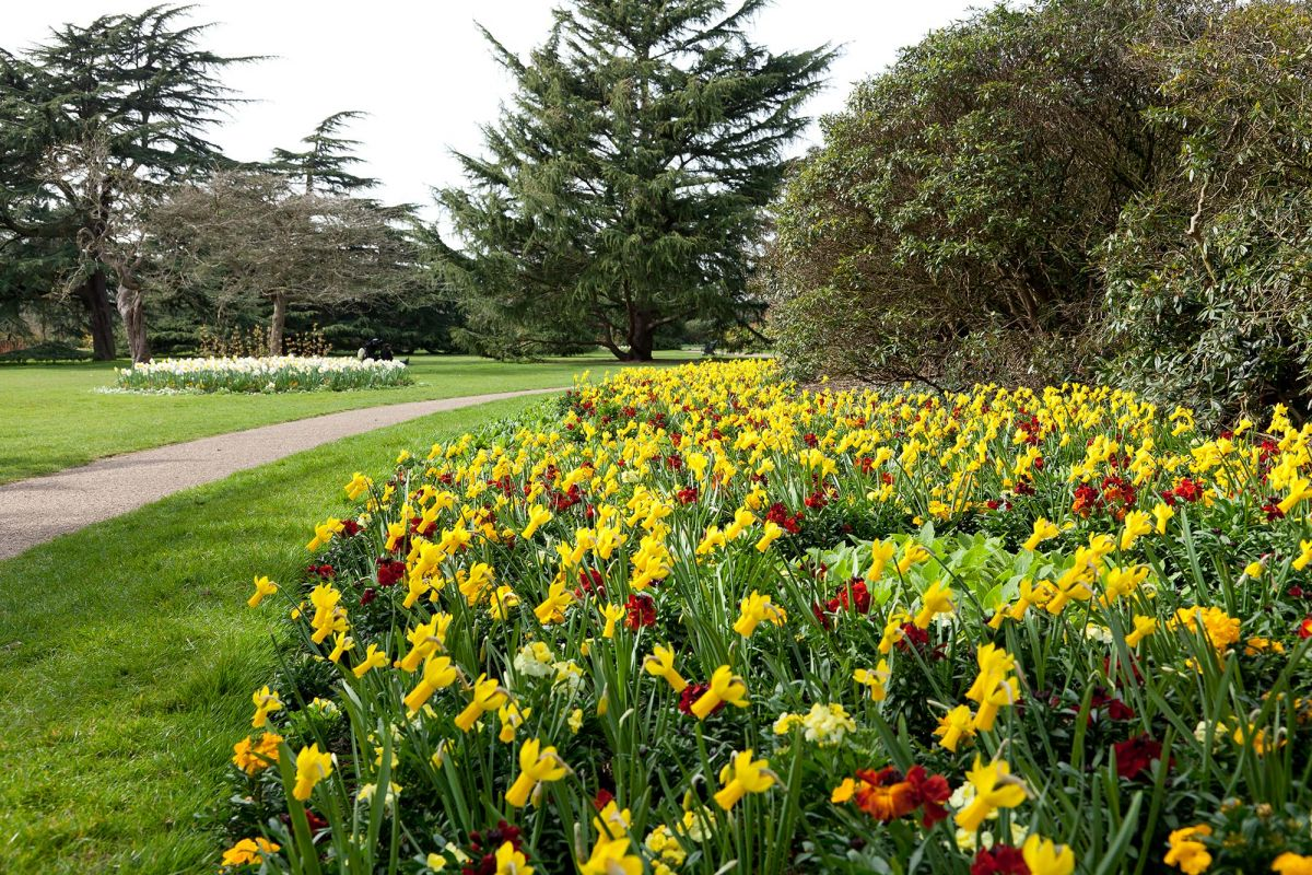The flower garden greenwich park the royal parks for Garden flower
