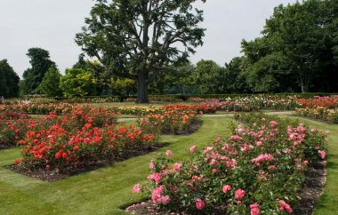 Garden beds in the Rose Gardens