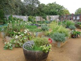 The Allotment in Kensington Gardens