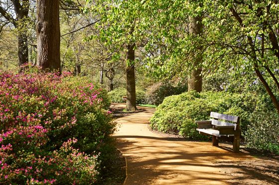 Bench and pathway in the Isabella Plantation